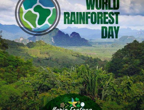 World Rainforest Day: i polmoni della Terra