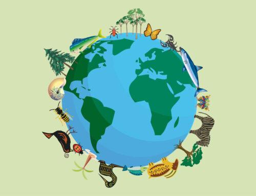 Mondo rurale: biodiversità fragile e nascosta
